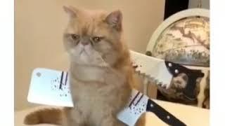 Костюм коту на хэллоуин