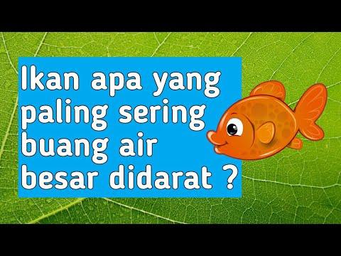 Pertanyaan Mustahil Yang Jawabannya Mudah Banget Tebak Tebakan Lucu Youtube