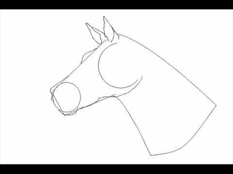 how to draw a horse the easy way old youtube