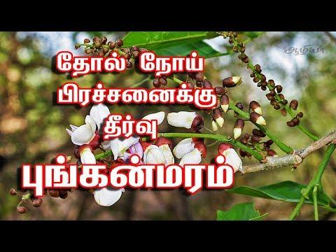புங்கை மரம் பயன்கள்  | Pongamia Tree In Tamil