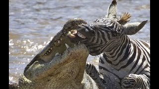 Top 10 Animals Have The Strongest Bite Force