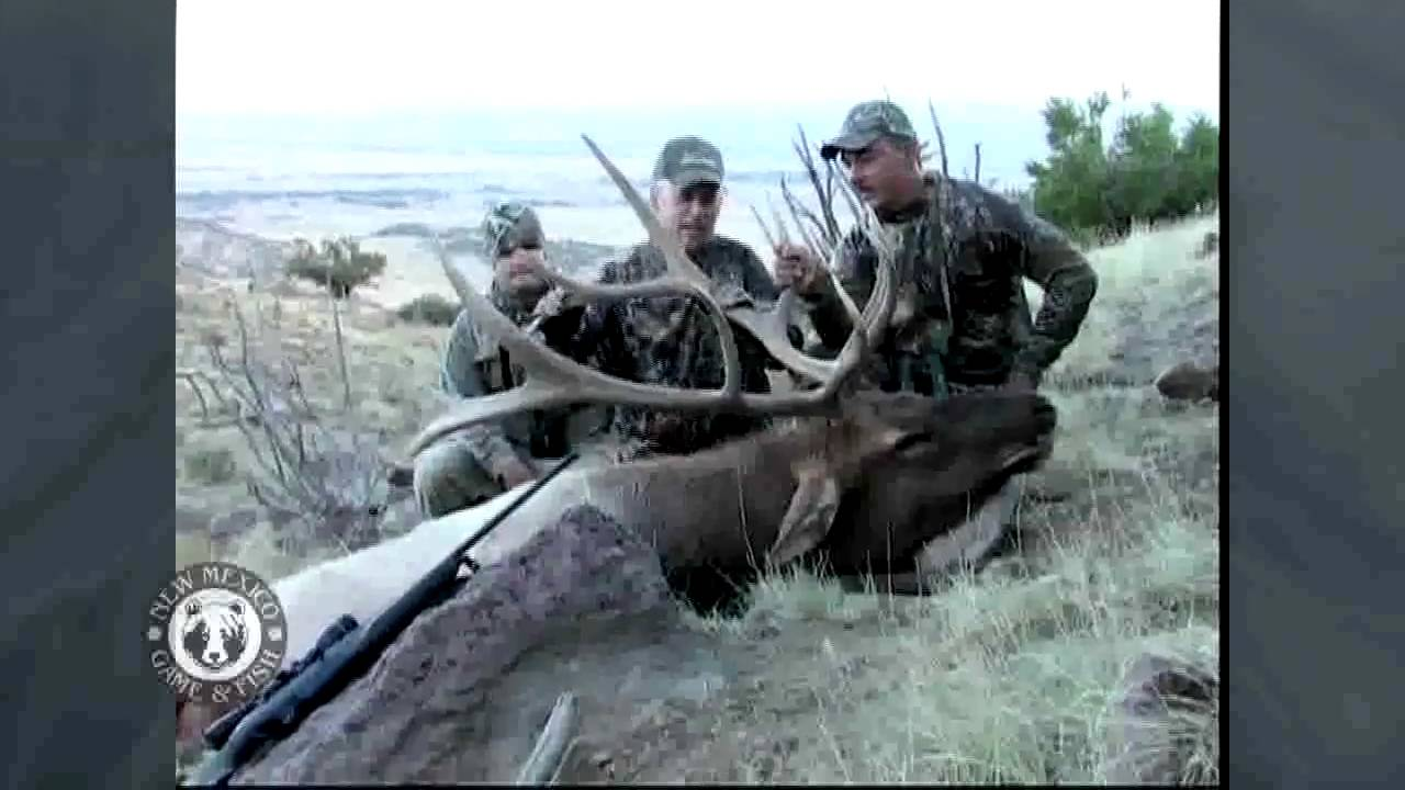 Guided mt taylor elk hunt youtube for New mexico game and fish login