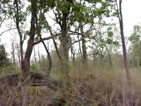 Tiger on the Rocks at Pench with Great Hyderabad Adventure Club www.ghac.in