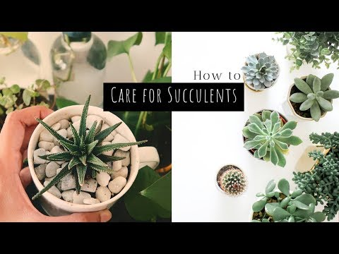 How to Care for Succulents in India | 5 Simple Tips // Garden Up