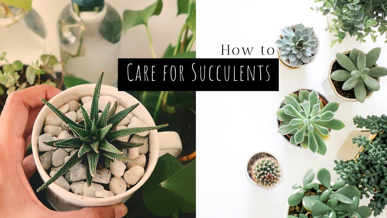 How To Care For Succulents In India 5