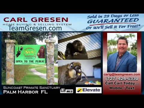 Number One Buyers Agent inPalm Harbor Florida
