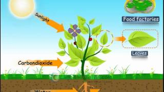 CBSE- Science - Class 7- NUTRITION IN PLANTS – PHOTOSYNTHESIS