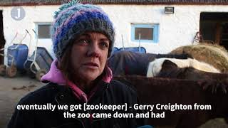 The volunteer-run farm where Ireland