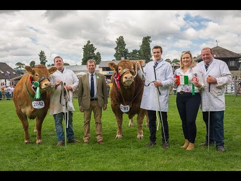 Limousin Judging at the Royal Welsh Show 2017