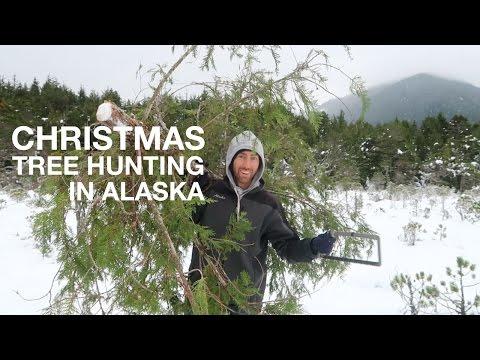 Christmas Tree Hunting in Alaska | Sitka, AK