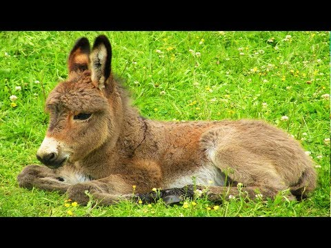 Les animaux de la ferme l 39 ne youtube - Animaux ferme photos ...