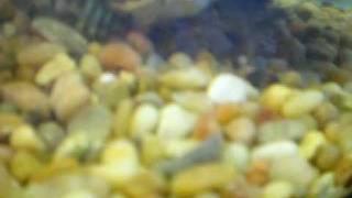 3 Tortugas vs 5 Crawfish part 2