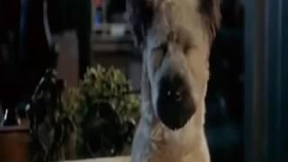 კარატისტი ძაღლი ქართულად