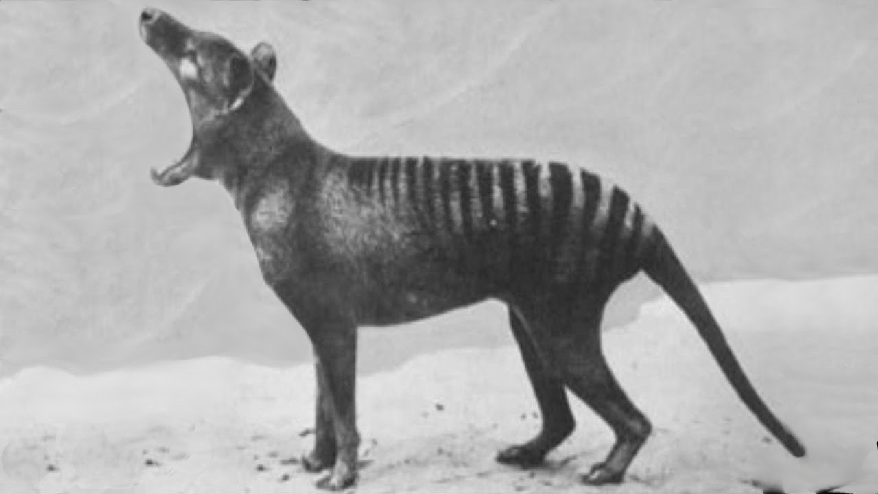 rare footage of the extinct animals youtube