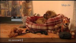 bluptv: Misshandlung Hundefriseur