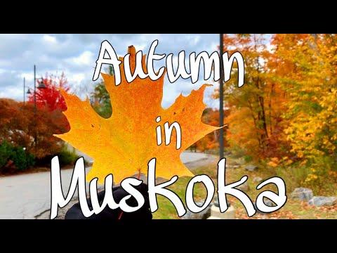Peak Autumn Foliage In Muskoka, Ontario, Canada | Travel Vlog