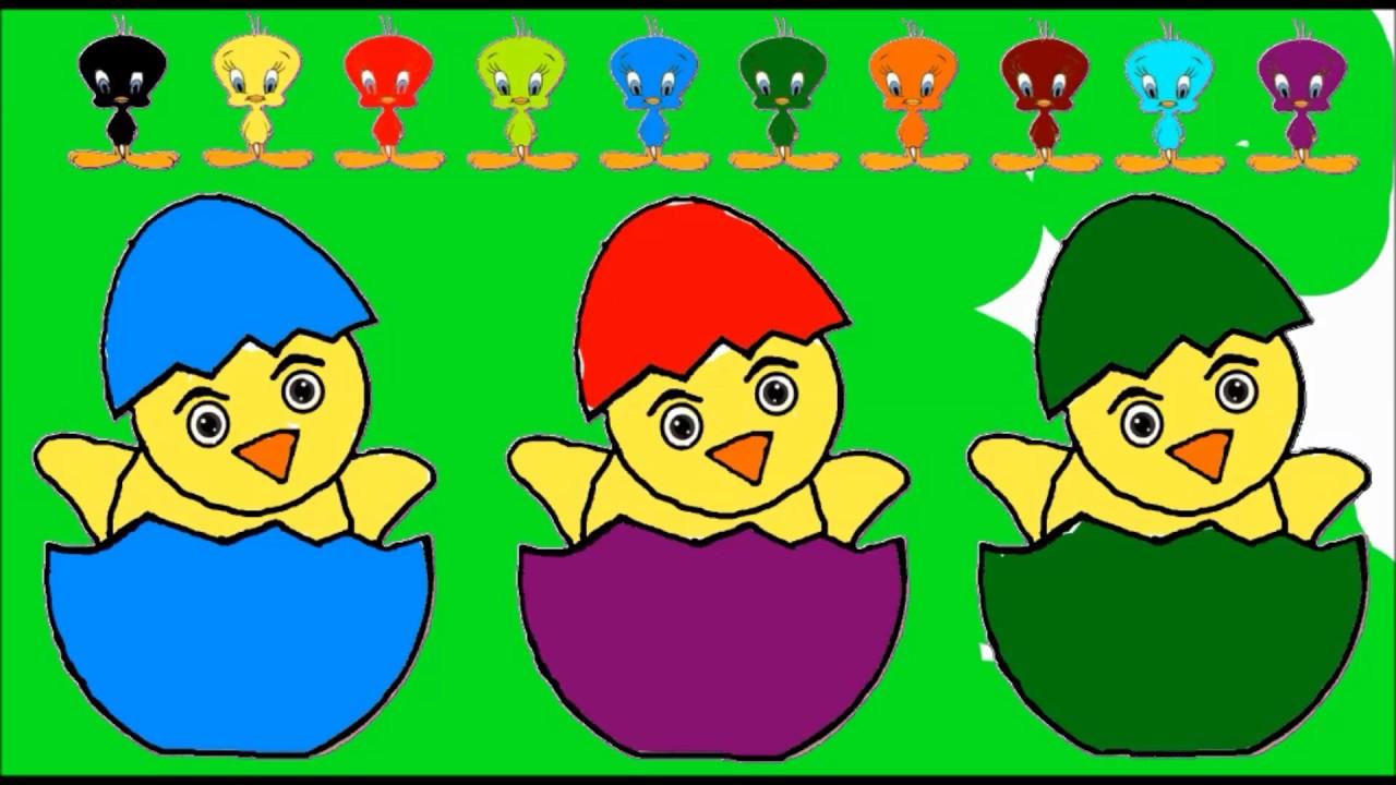 Civciv Boyama Sayfaları Renk öğrenme Youtube