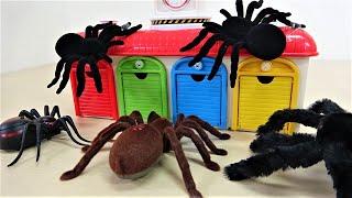トーマス、タヨ、スパイダーマン、ハルク、クモのモンスターの話、ディズニー カーズ
