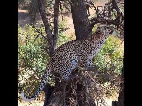 2015 Zuid Afrika 07 Kruger Park