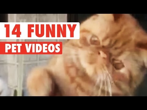 14 Funny Pet Videos Compilation 2016