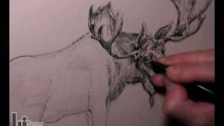 Drawing a Moose (American Wildlife T-Shirts Series)