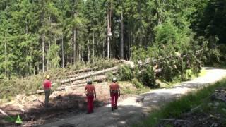 NlP. Bayerischer Wald: Mit Puma gegen Borkenkaefer- Puma fights the bark beetle