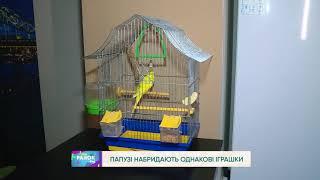як зробити папузі іграшку своїми руками