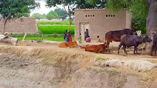 Pakistani Punjab Village Life Near Dhingana Canal | Tour On Bike