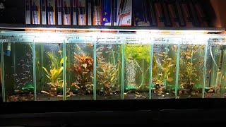 Сколько рыбок можно содержать в аквариуме