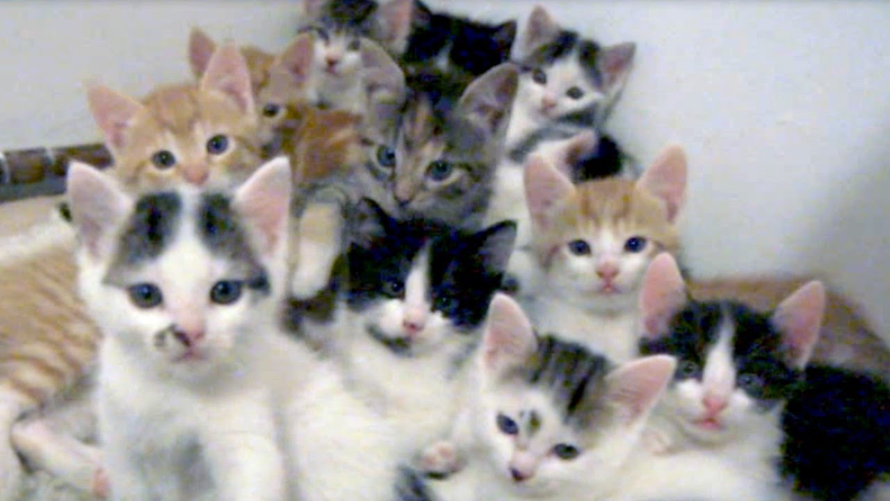 So many little kittens stare