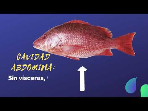 Características a tener en cuenta al comprar un pescado