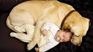 BEST FUNNY Dogs Babysitting Kids & Babies    Funny Vines Compilation