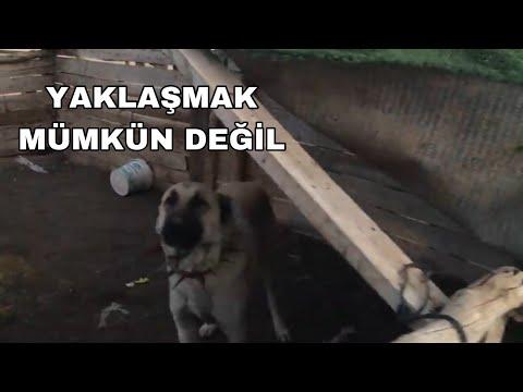 Tik Tok En Efsane Köpek Videoları#2#
