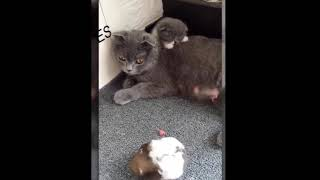 Cute is Not Enough Funny Cats and Dogs Compilation 59