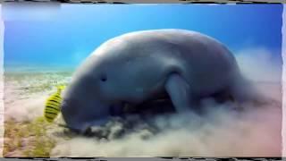 ОЧЕНЬ СМЕШНЫЕ ЖИВОТНЫЕ   MOST FUNNY ANIMALS #589