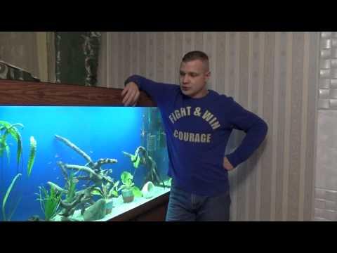 Правильное кормление аквариумных рыб
