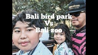 MIKIR: Bali Bird Park & Bali Zoo thumbnail