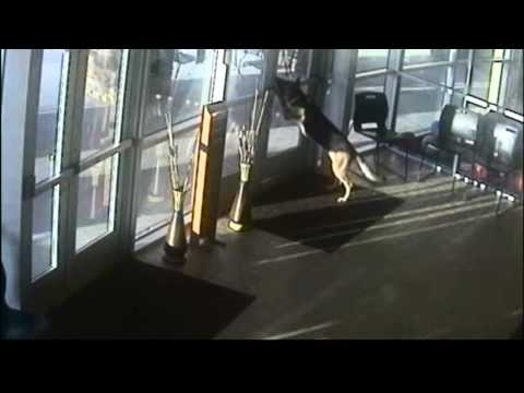 Dog Escapes Shelter YouTube - Dog escapes from kennel to comfort abandoned crying puppies