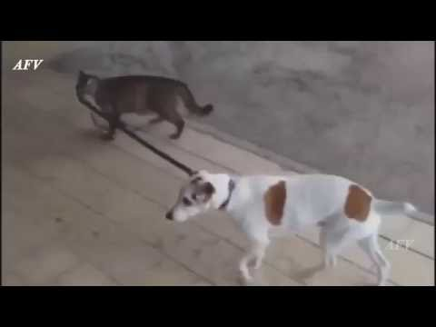Funny, Clever Cats, Best Pets Compilation, Dog Tricks, Cat & Dogs, Pet Animals Agility