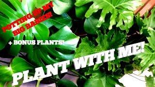 PLANT WITH ME! PLANTING UP MY BIG PLANT BABIES PLUS BONUS PLANTS!