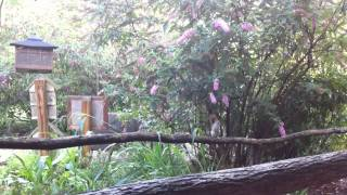 Squirrel Jumping on Bird Feeder - High Hampton Inn - Cashiers, North Carolina