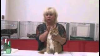 Выставка кошек в Омске (2015)