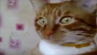 Смотреть смешные видео про животных