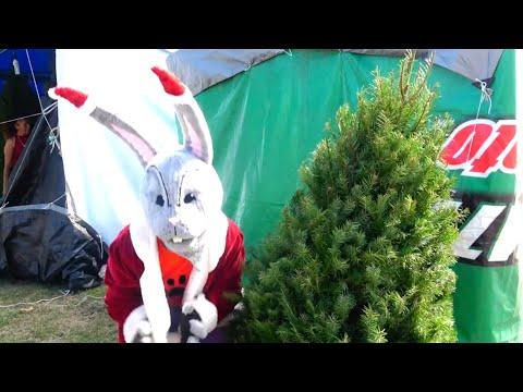El terrible conejo Mala Pata nos roba el pinito de Navidad.  - El Show de Bely y Beto