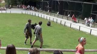 Atak bielika amerykańskiego na sokolnika.