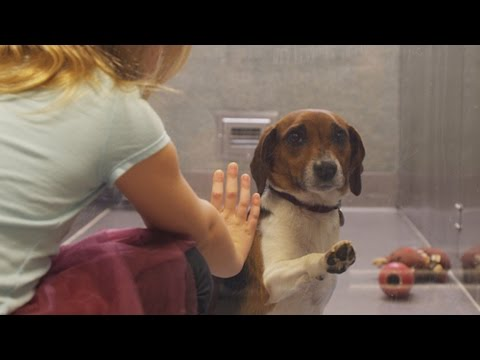 If this video about a shelter dog doesn't move you, check your pulse!