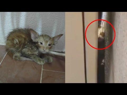 How Pokémon Go Saved This Kitten's Life
