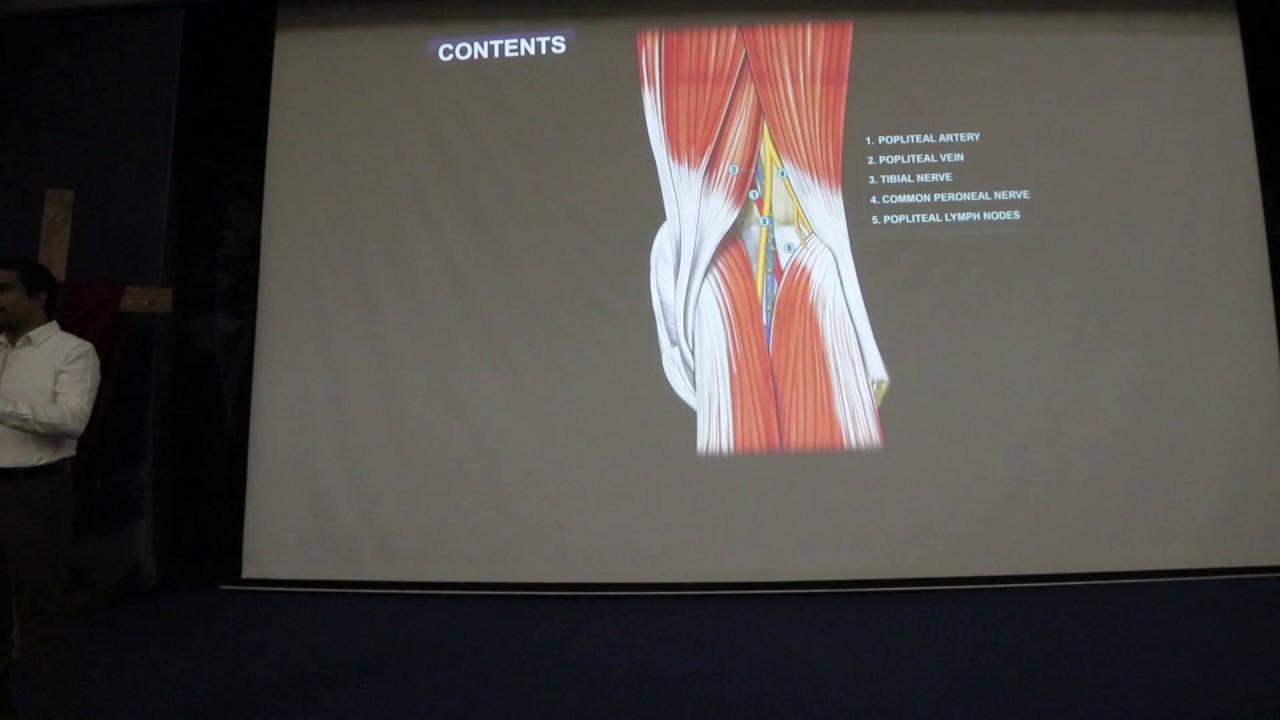 Popliteal fossa : Gross anatomy , Boundaries , Contents - Class room ...