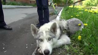 В Тюмени полицейские вернули мужчине инвалиду похищенную собаку