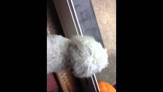 Dog Still Barker At Mailman